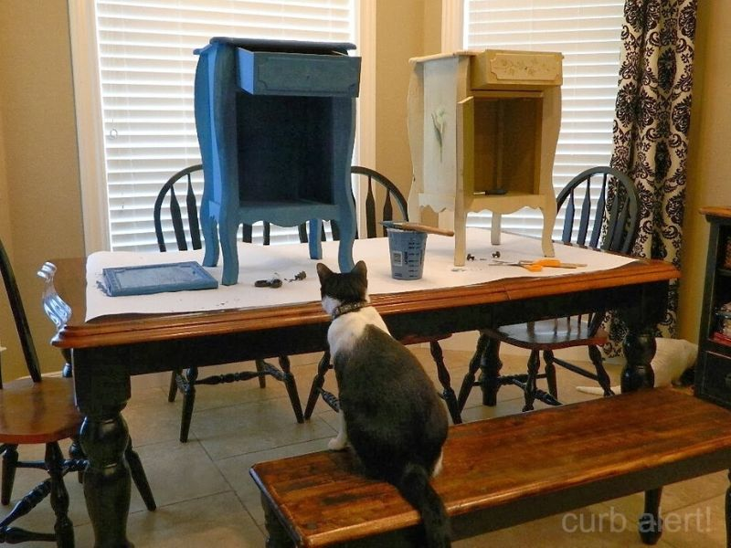 Cat looking on as I paint the tables